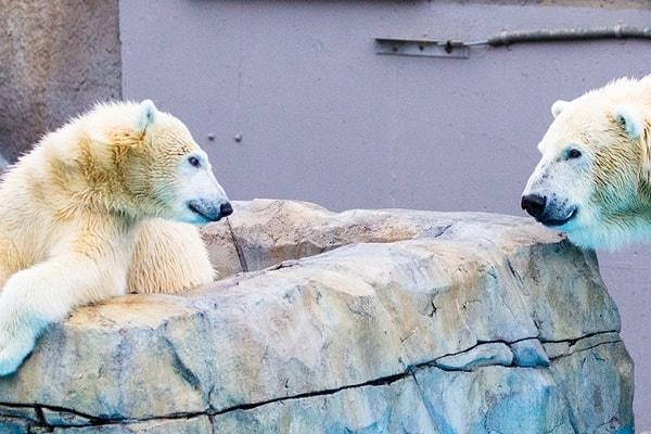 Zoo and Wildlife Parks in Freiburg Im Breisgau
